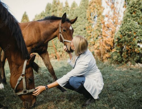 How to Find a Good Equine Vet in Your Area?
