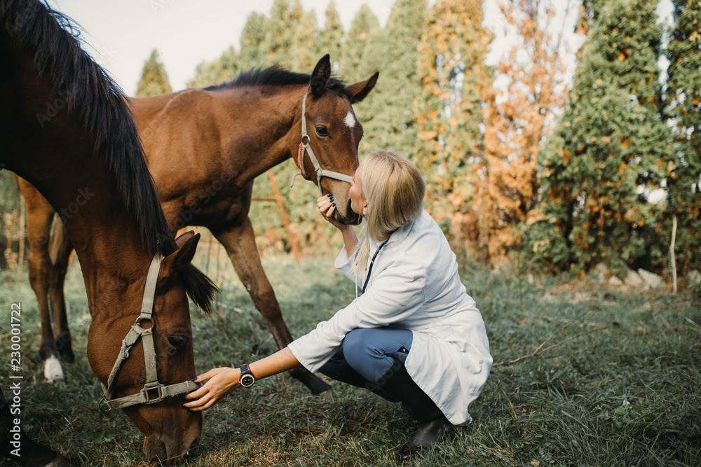 Good Equine Vet