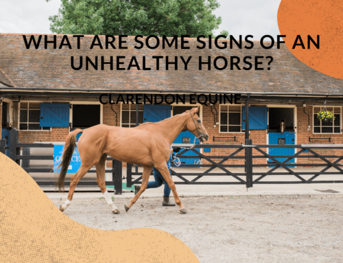 What Are Some Signs of an Unhealthy Horse Observed By Equine Vets?