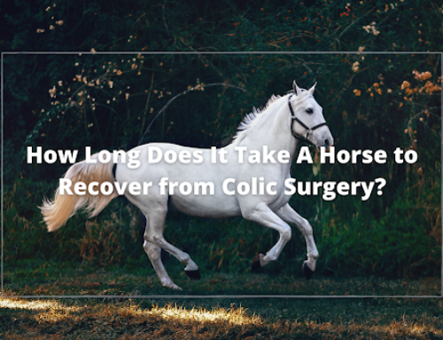 How Long Does It Take A Horse to Recover from Colic Surgery?