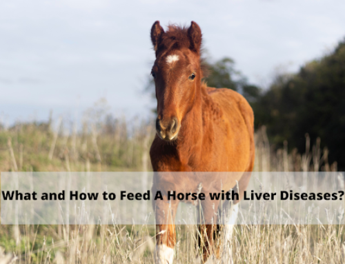 What and How to Feed A Horse with Liver Diseases?