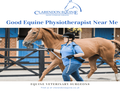 Good Equine Physiotherapist Near Me